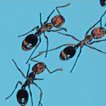 ヒアリの殺虫剤・アマゾンで買えるメーカーは?フマキラー、アース…